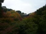 tofukuji101122-2.JPG